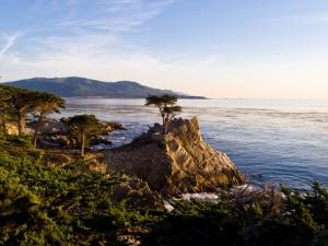 Lone Cyprus Tree California