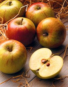 Apples_228x291